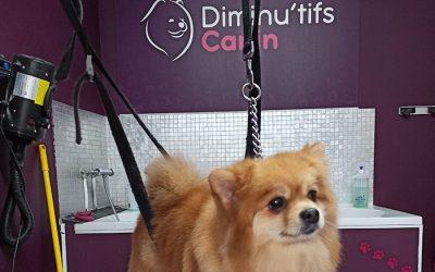 Diminu'tifs Canin – Toilettage – 6220 Lambusart