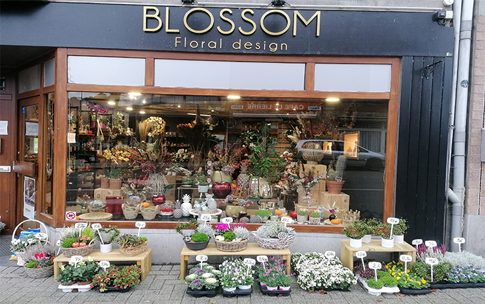 Fleuriste Liege sdi federation blossom floral